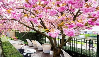 WHAT IS IT LIKE TO STAY AT HOTEL OKURA AMSTERDAM
